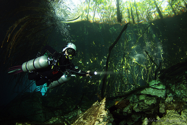 Under the Roots at Cenote Ponderosa