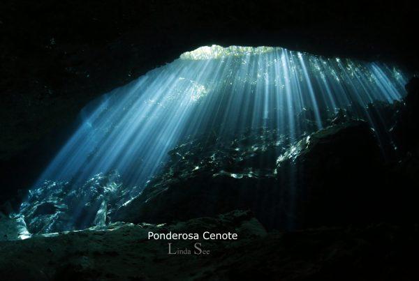 Cenote Ponderosa, Cenote Garden of Eden, Linda See Photography, Cenote Diving Akumal, Cenote Tour Akumal