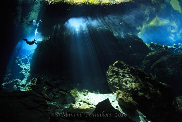 Chac Mool Cavern Dive, Cenote Dive Mexico, Chac Mool Cenote, Under the Jungle, Cavern Diving Playa del Carmen